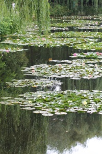 Monet's actual water lilies.