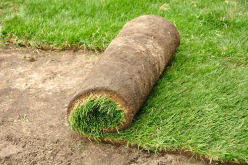12916641 - unrolling sod for a new lawn